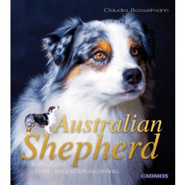 australian_shepherd