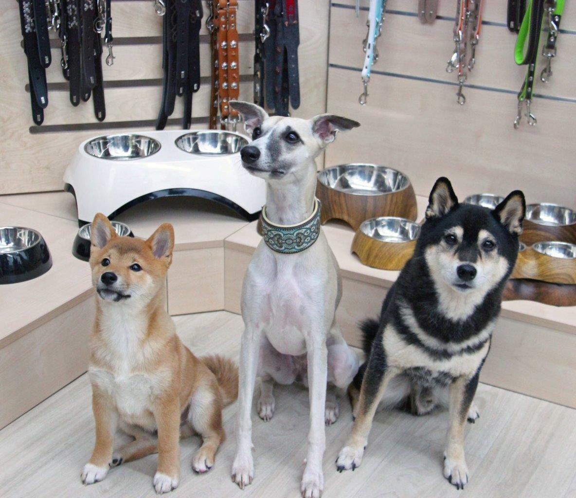 Foto 1 Petspremium Bürohunde