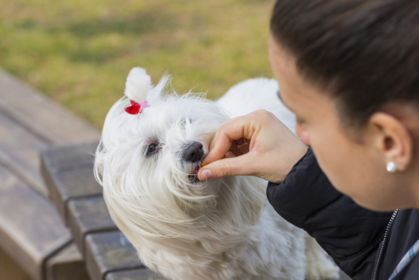 Foto: Josfor / Shutterstock.com