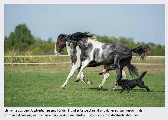 PferdHund5