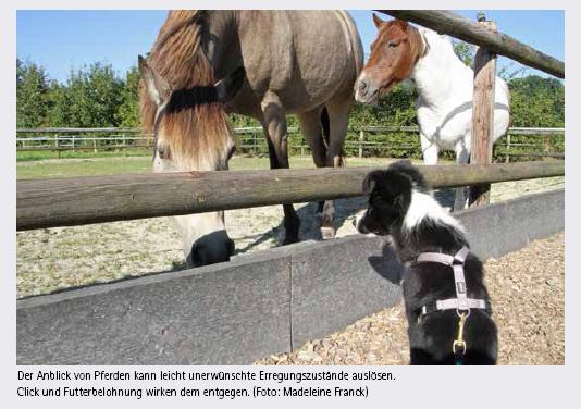Pferd_Hund3