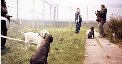 Jailhouse Dogs. Welpen im Strafvollzug