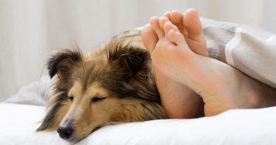 Auf Morpheus Schwingen – Warum man schlafende Hunde tatsächlich nicht wecken sollte