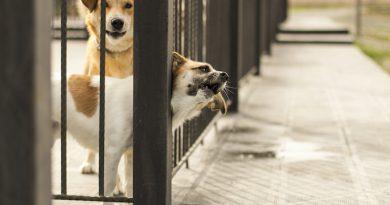 Die Tierheim-Akademie – Wie Hunde besser vermittelbar werden