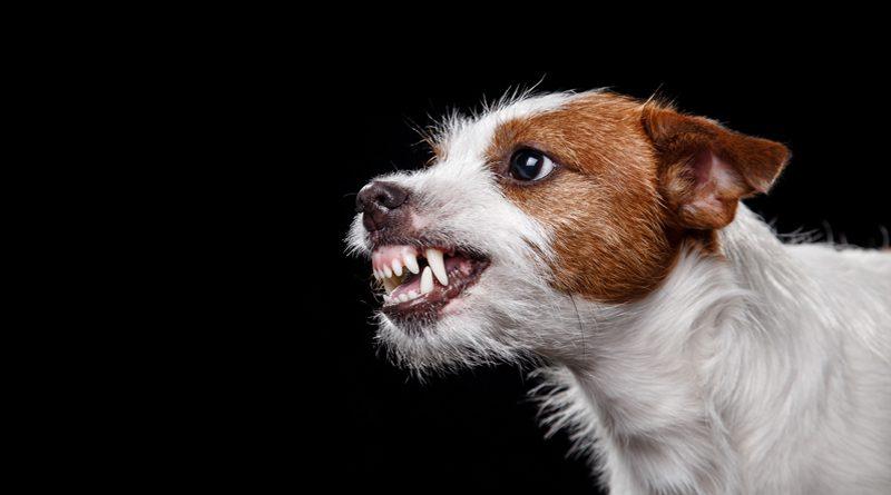 Hilfe, mein Hund beißt!