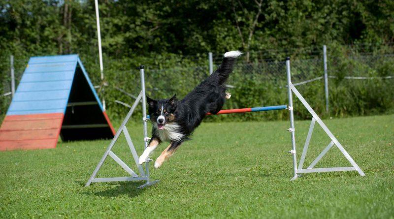 Gesunde Gelenke – wichtig für alle sportlichen und bewegungsfreudigen Hunde