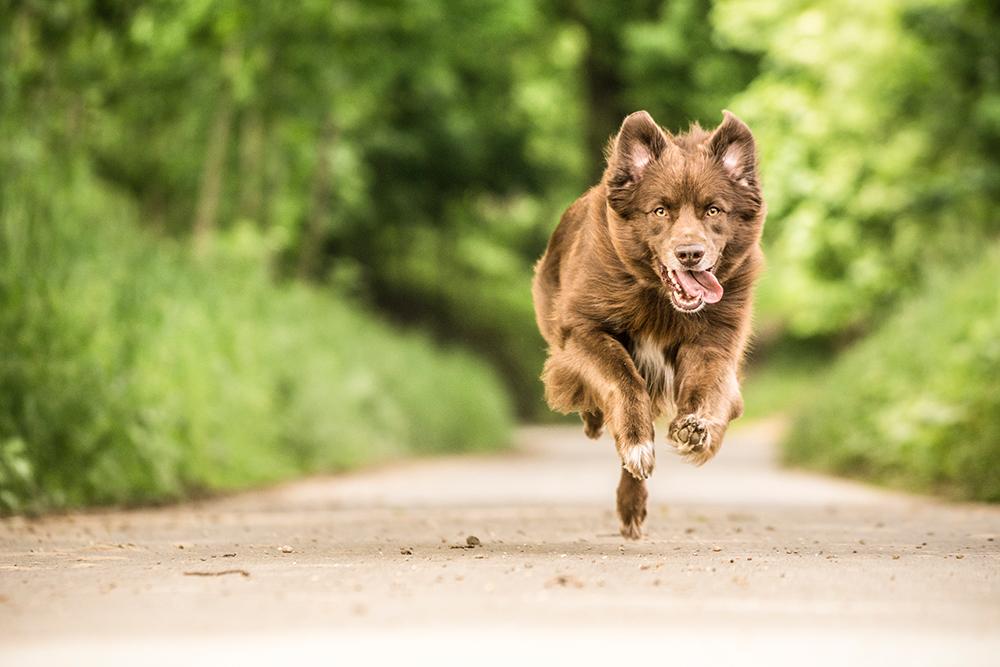 Happy Dog - Online - Gesunde Gelenke_SPF ab 04.07.2018 Sport