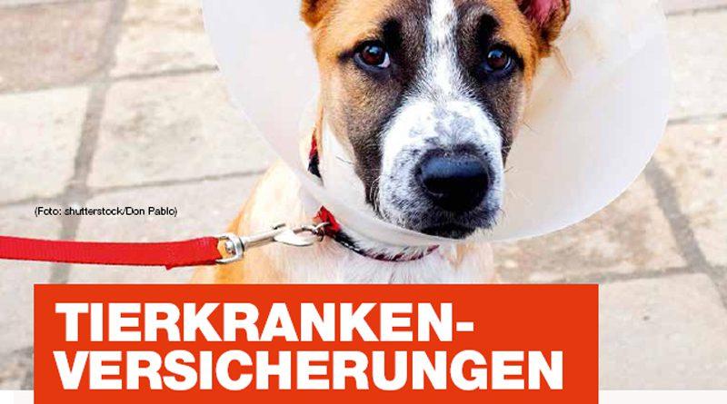 Tierkrankenversicherungen – Solidarprinzip oder Abzocke?