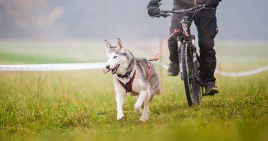 Bikejöring mit Verstand und Gefühl – Expertentipps von Peter Hummel
