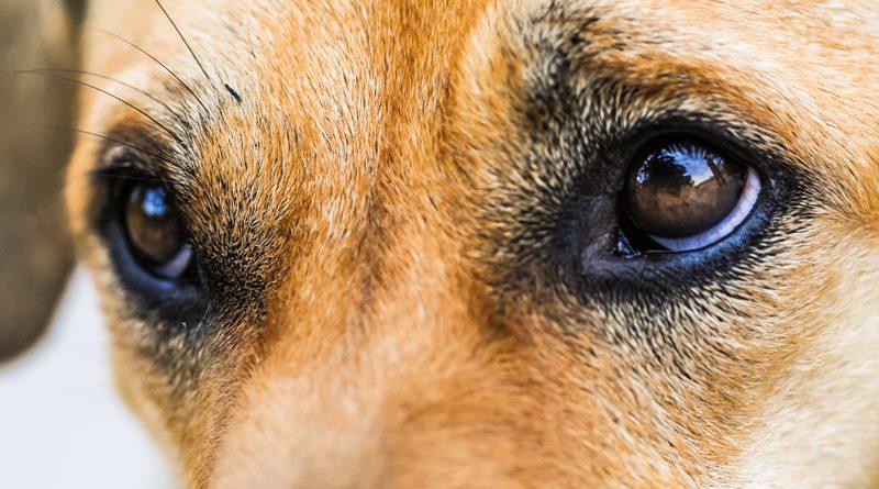 Hau drauf und gut? Gewalt im Hundetraining und was du dagegen tun kannst