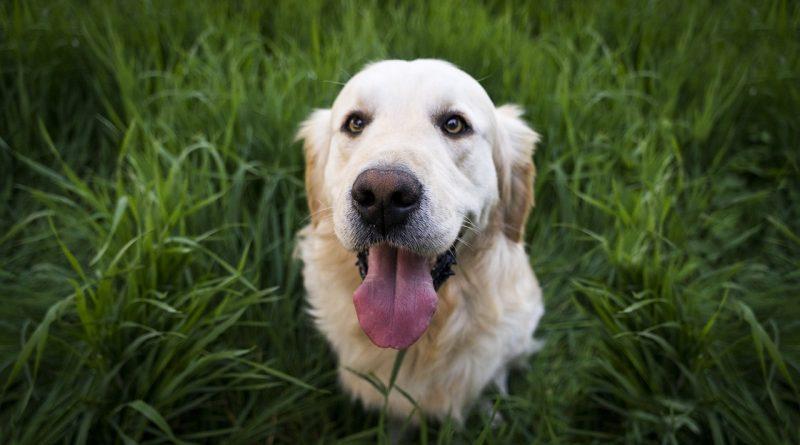 Welcher Hund für dich geeignet ist