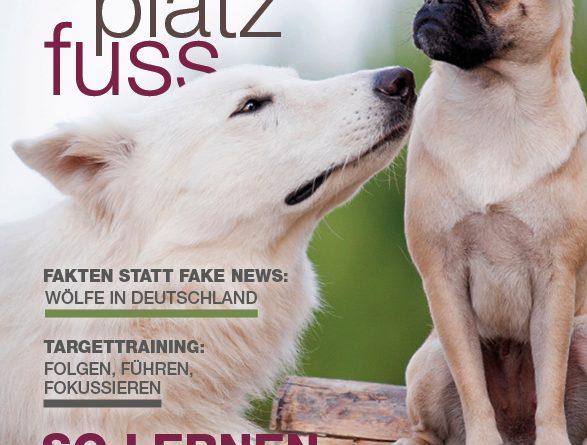 SitzPlatzFuss 35 Cover