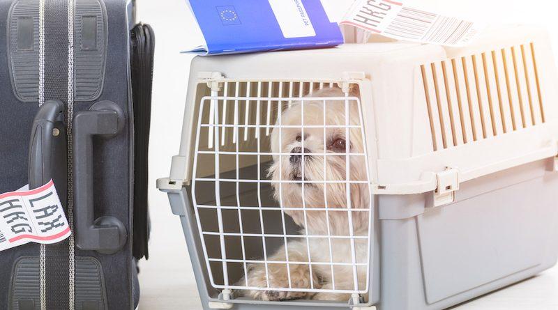 Hunde auf Reisen – Wichtige Tipps und Hinweise