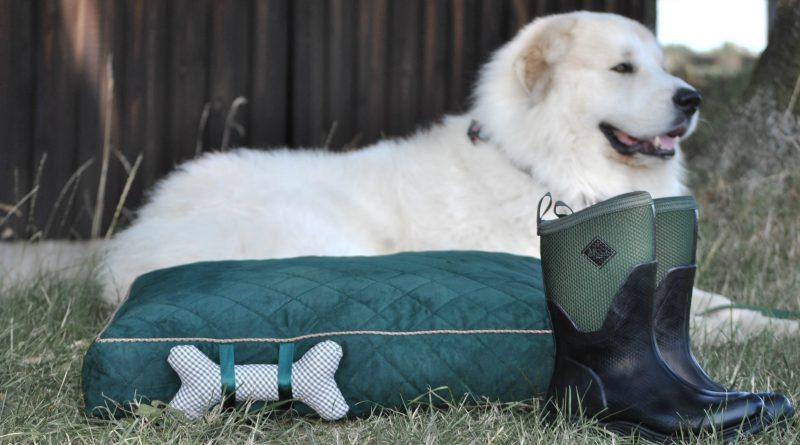Exklusive Verlosung am Aktionstag: Für Spaziergänge mit dem Hund und mehr – Arctic Sport II & Hundebett