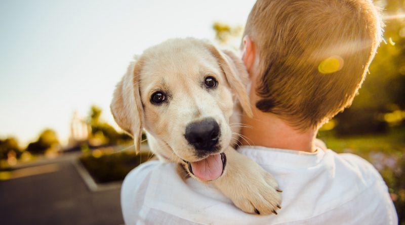 5 Tipps, um die Partnerschaft zwischen Hund und Herrchen zu intensivieren
