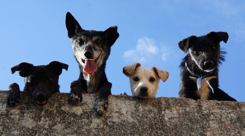 Warum eine Hundehaftpflichtversicherung sinnvoll und sicher ist