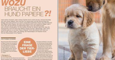 Eine Frage der Tierliebe: Wozu braucht ein Hund Papiere?!