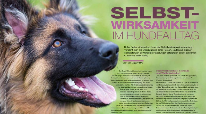 Selbstwirksamkeit im Hundealltag