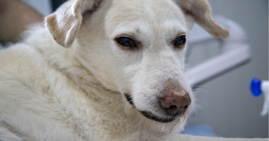 Gebührenordnung beim Tierarzt: Mit welchen Kosten Hundehalter rechnen müssen
