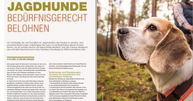 Jagdhunde bedürfnisgerecht belohnen
